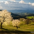 In the land of cherry blossom II